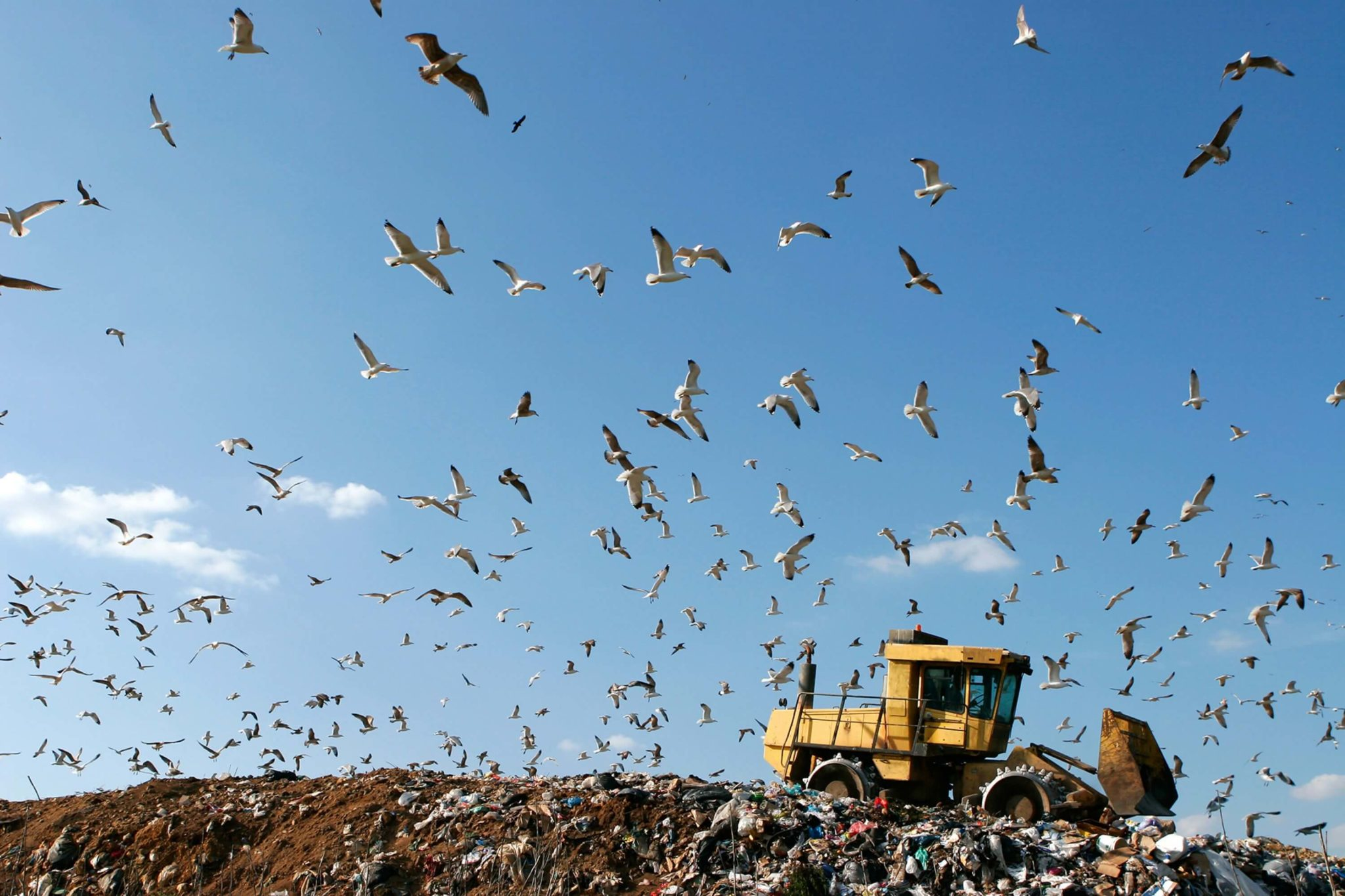 Bird Control and Waste Management