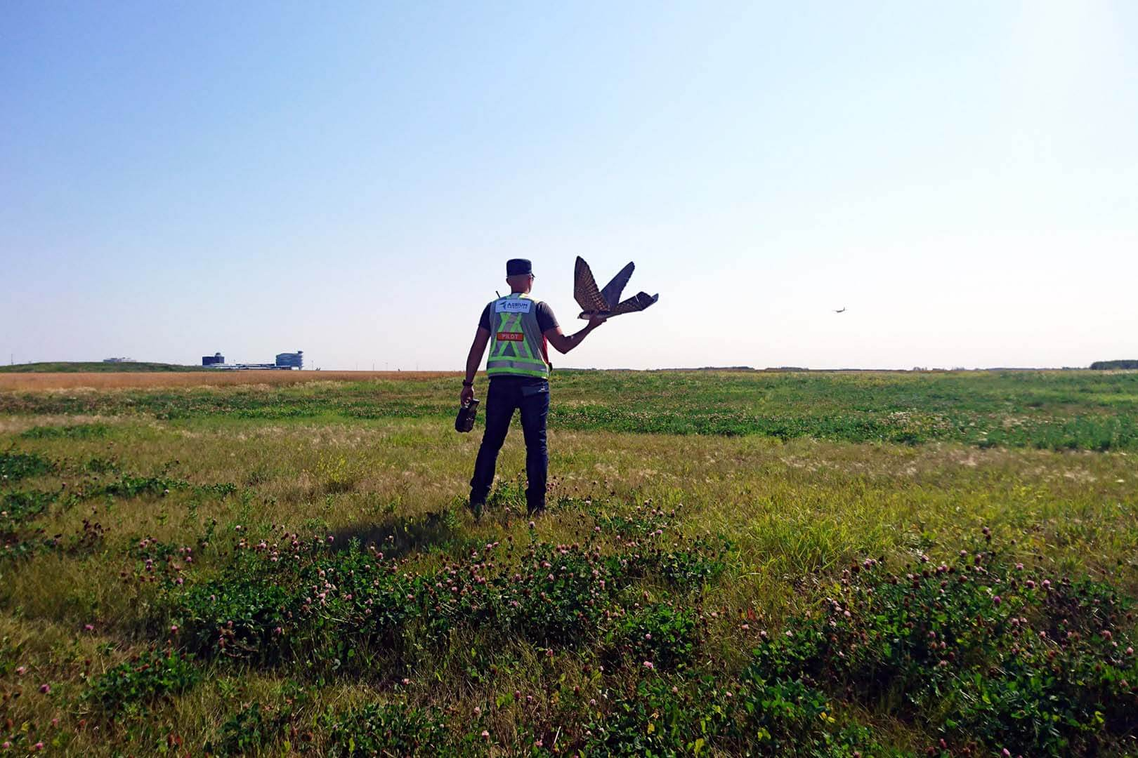 The Drone Bird wildlife management at Edmonton International Airport