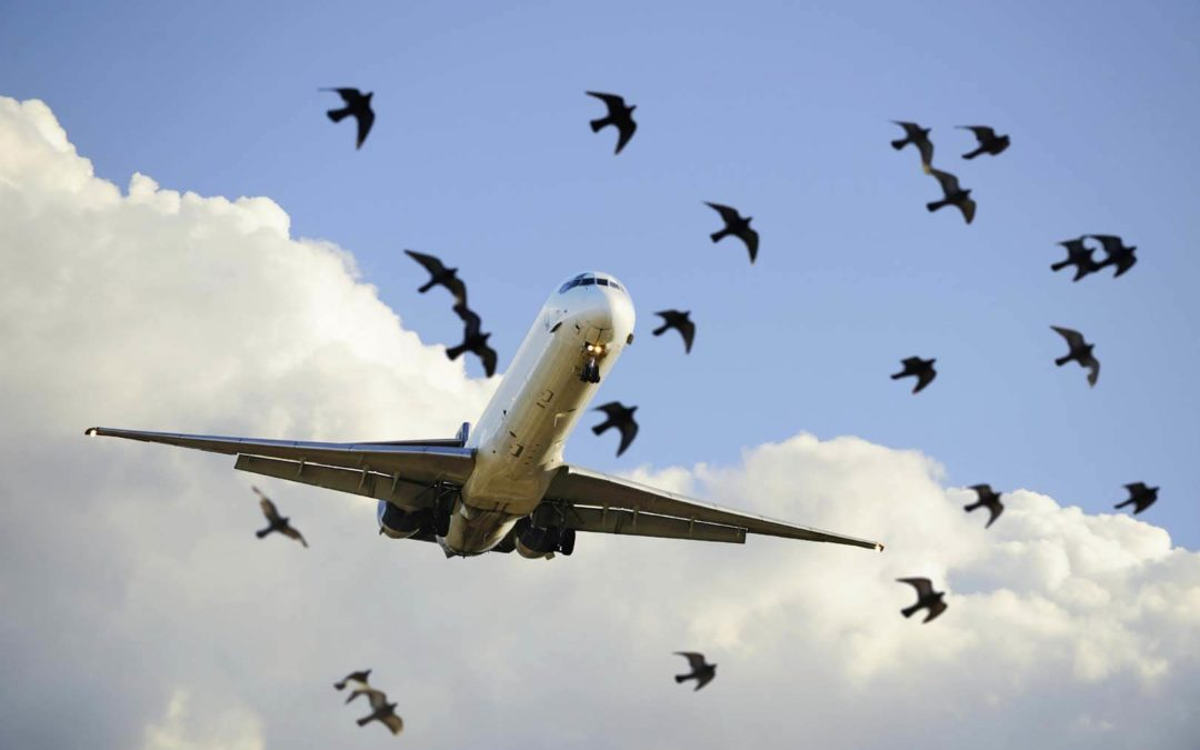 OVER 300 DRONE BIRD FLIGHTS AT AIRPORTS WORLDWIDE