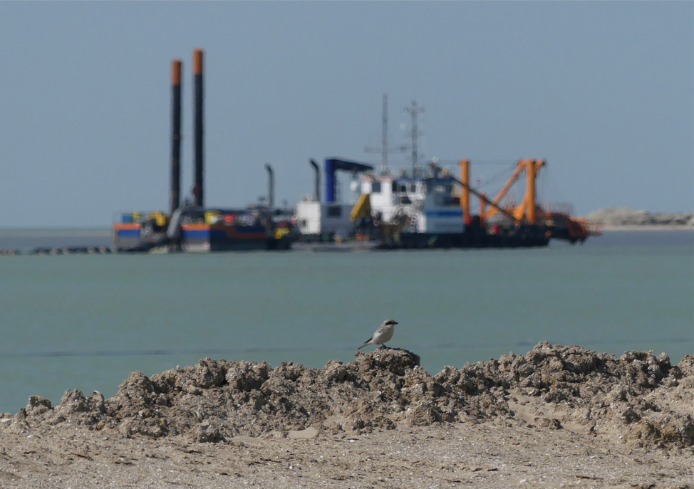 The Drone Bird reducing nesting for construction and dredging in the Prorva Marine Channel